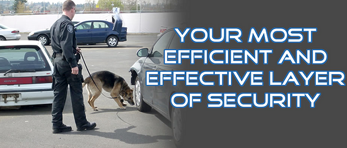 Action K-9 Security Gets an Updated Look
